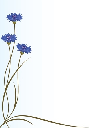 vector background with flowers of cornflowers for corner design Vector