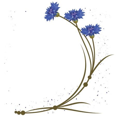 fiordaliso: sfondo con fiori dei fiordalisi
