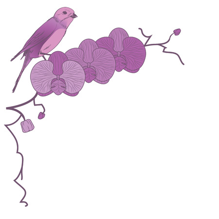 vector floral  illustration of orchid and bird Vector