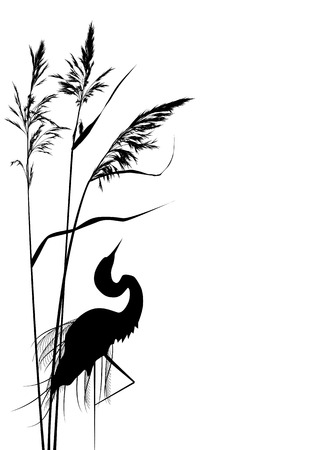 vector background with reed and heron in black and white colors Vector