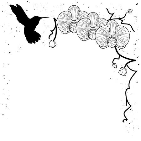 Ilustración Vectorial De La Orquídea Y El Colibrí En Colores Blanco