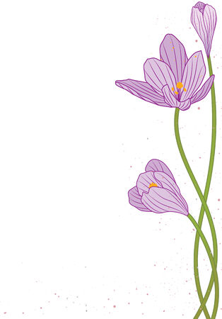 background with flowers of crocus
