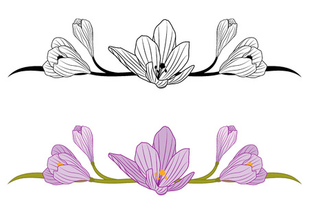 set of borders with flowers of crocus