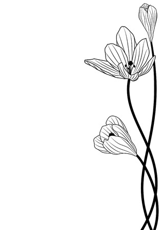 background with flowers of crocus in black and white colors Vector