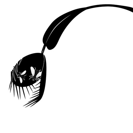 vector illustration of Venus flytrap in black and white colors with fly