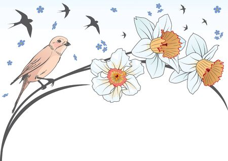 awakening: vector background with bird and flowers of narcissus