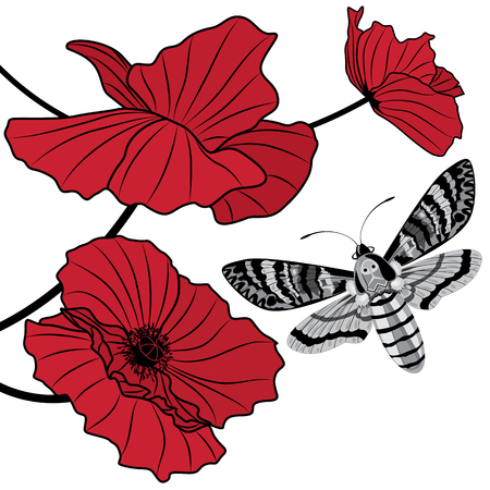flower art: vector background with deaths head hawk moth (Acherontia atropos) and flowers of red poppy