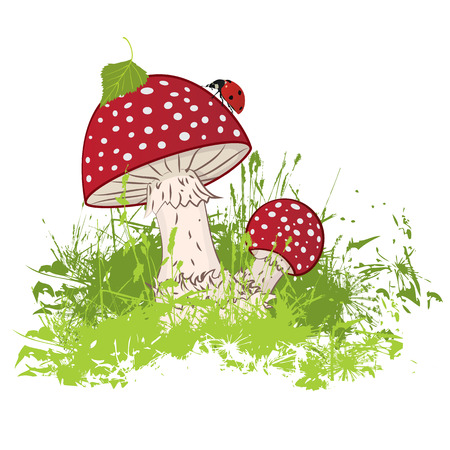 ladybird: vector illustration of the mushroom and ladybird Illustration