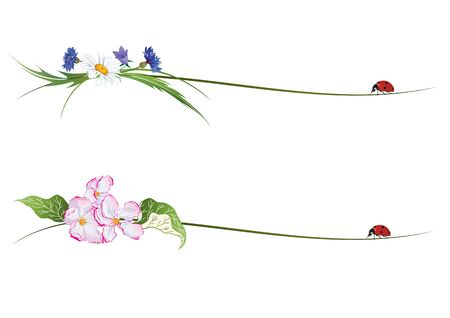ladybird: set of vignettes with flowers and ladybird Illustration