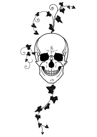 illustration of skull  and ivy in black and white Illustration