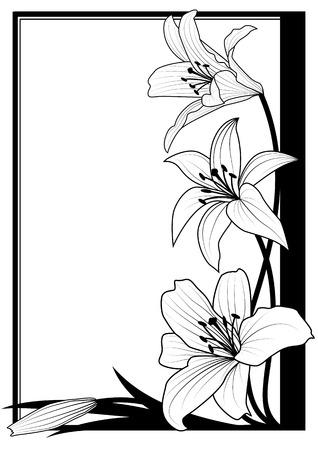 Telaio vettoriale con giglio nei colori bianchi e nero Archivio Fotografico - 64379891