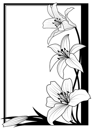 lily buds: vector frame with lily in black and white colors