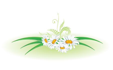 vector floral illustration with aloe and daisy Illustration