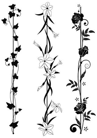 zestaw pionowych przegródek kwiatowych z bluszczem, kwitnącym tytoniem i różami w czerni i bieli Ilustracje wektorowe