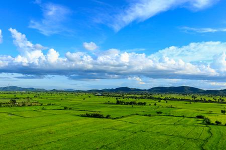 Landscape with green fields in Sri Lanka