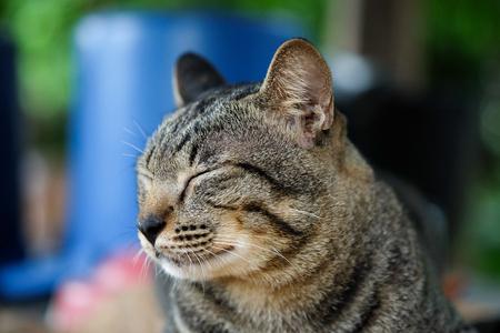 moggy: sleep cat Stock Photo