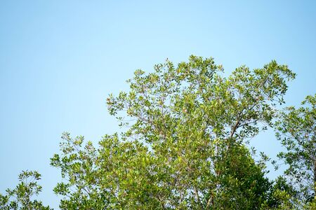 skie: The tree and sky