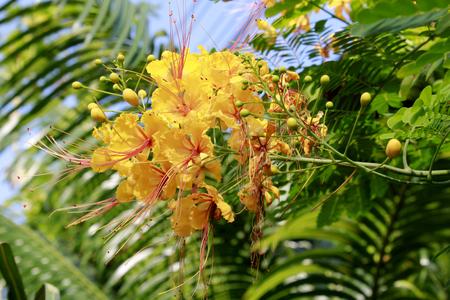 leguminosae: flower