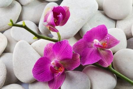 streaked: Pink streaked orchid flower - phalaenopsis on stones Stock Photo