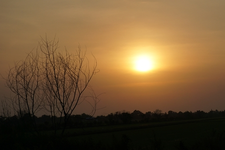 sunset with the die trees and rice field photo