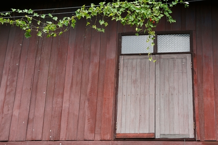 old red wood window with the coccinia grandis photo