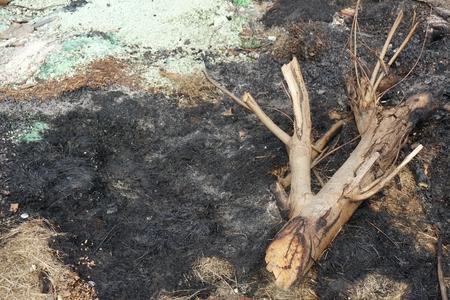 quemado: basura quemada despu�s hacer el mal ambiente