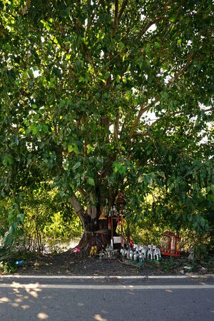 thai believe: Thai believe the spritual live in the peepul tree