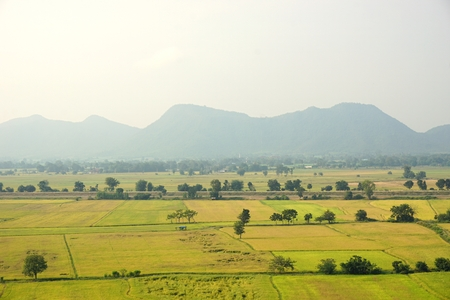 view of rice field landscape in Thailand photo