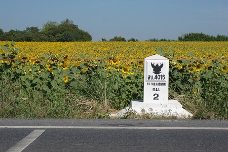 kilometer: sunflower field with a kilometer stone on the road