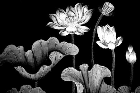 abstract black and white lotus art work
