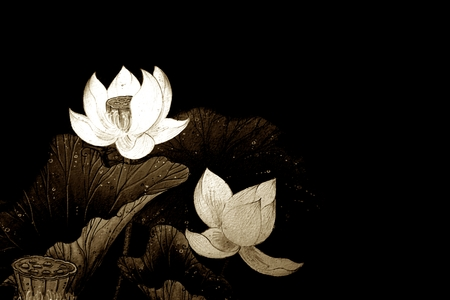 lilies: abstract of brown lotus for background used