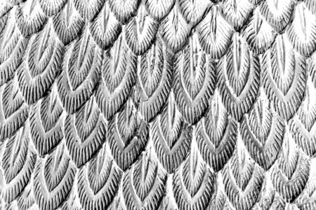 sliver: abstract sliver stucco feather in spear shape