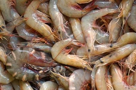 black tiger: fresh white shrimp and black tiger prawn Stock Photo