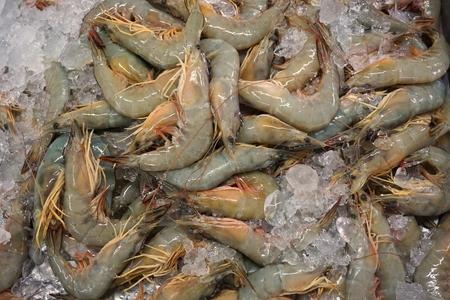 soak: fresh white shrimp soak with ice sale at the market Stock Photo