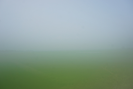 leaves green: view of rice field in mist in Thailand for background used Stock Photo