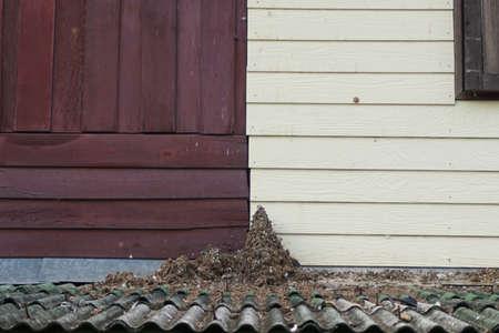 shit: heap of bird shit in abadon house