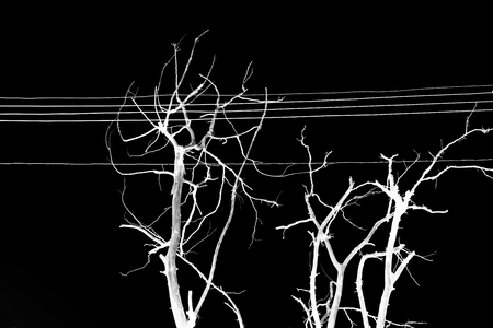 electric grid: danger of death tree touch the electric wire in Thailand Stock Photo