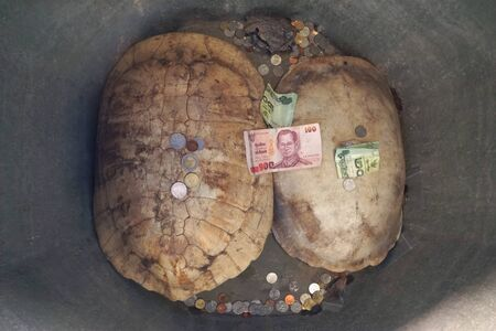 thai believe: Thai people believe in donate the money to tortoise shell for luck and healthy