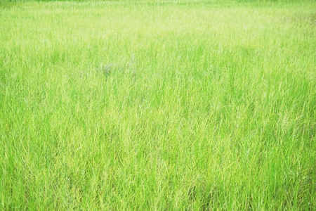 abstract grass field in countryside of Thailand Stock Photo
