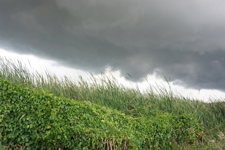 coming of rain in the rainy season in Thailand