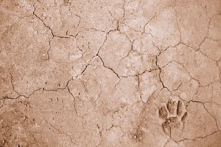 dog foot print on ground for background used