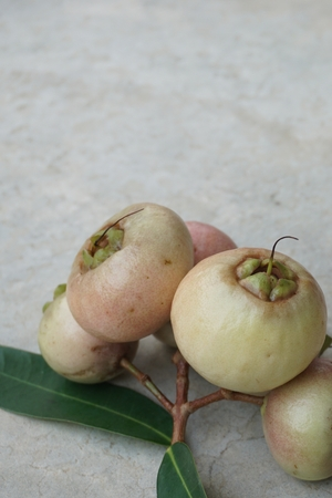 Syzygium jambos is another type of rose apple in Thailand