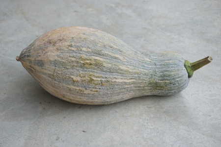 close up of native squash fruit in Thailand Фото со стока