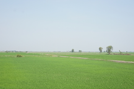 view of green rice field in Thailand