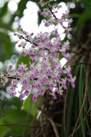 tiny pink wild orchids in tropical garden