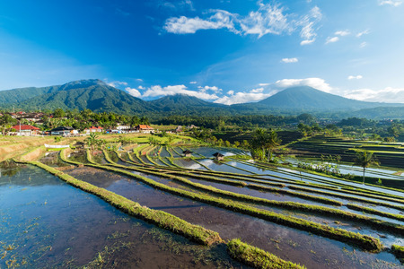prestigious: Bali Rice Terraces. The beautiful and dramatic rice fields of Jatiluwih in southeast Bali have been designated the prestigious UNESCO world heritage site. Stock Photo