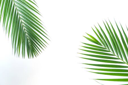 Palm leaf isolated on white background with clipping path. Summer background concept.