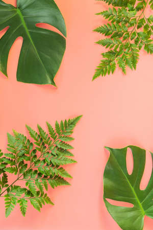 Monstera and fern leafs lay on pink background. Summer background concept.