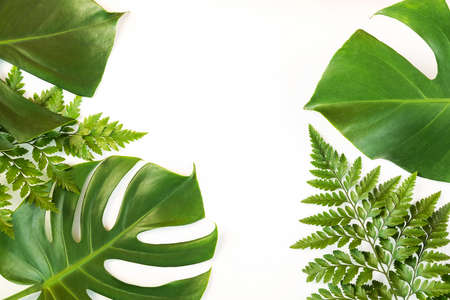 Monstera and fern leafs lay on white background. Summer background concept.