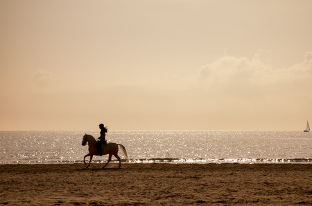 horseback: Horse riding silhouette at the beach in a clear golden hour Stock Photo